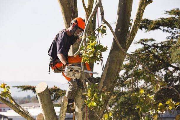 Le métier de grimpeur-élagueur exige une excellente condition physique et une certaine souplesse