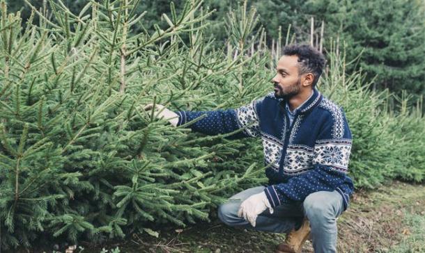Fiche métier Producteur de sapins de Noël (H/F) | ouestfrance emploi